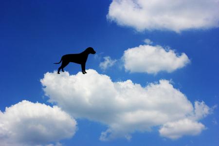 wolkenhund